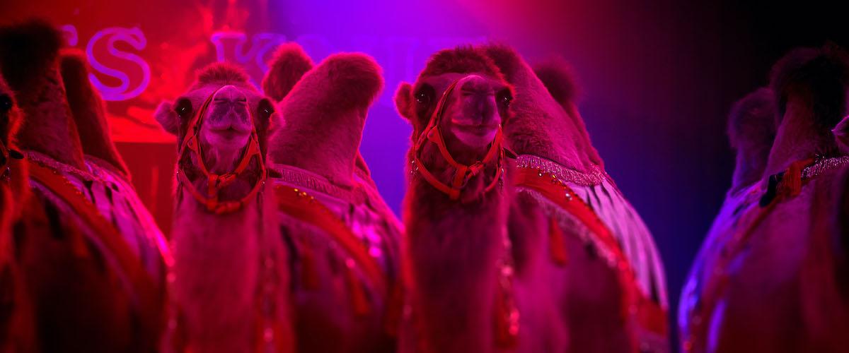 10 Zirkus Reportage trinkhaus fotografie